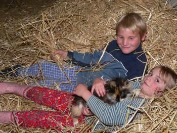 Unsere kinderlieben Katzen auf dem Bauernhof - Bauernhofurlaub im Bayerischen Wald - Bodenmais Zwiesel Viechtach