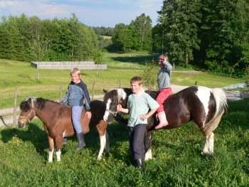 Unsere Ponys zum Reiten rund um den Bauernhof