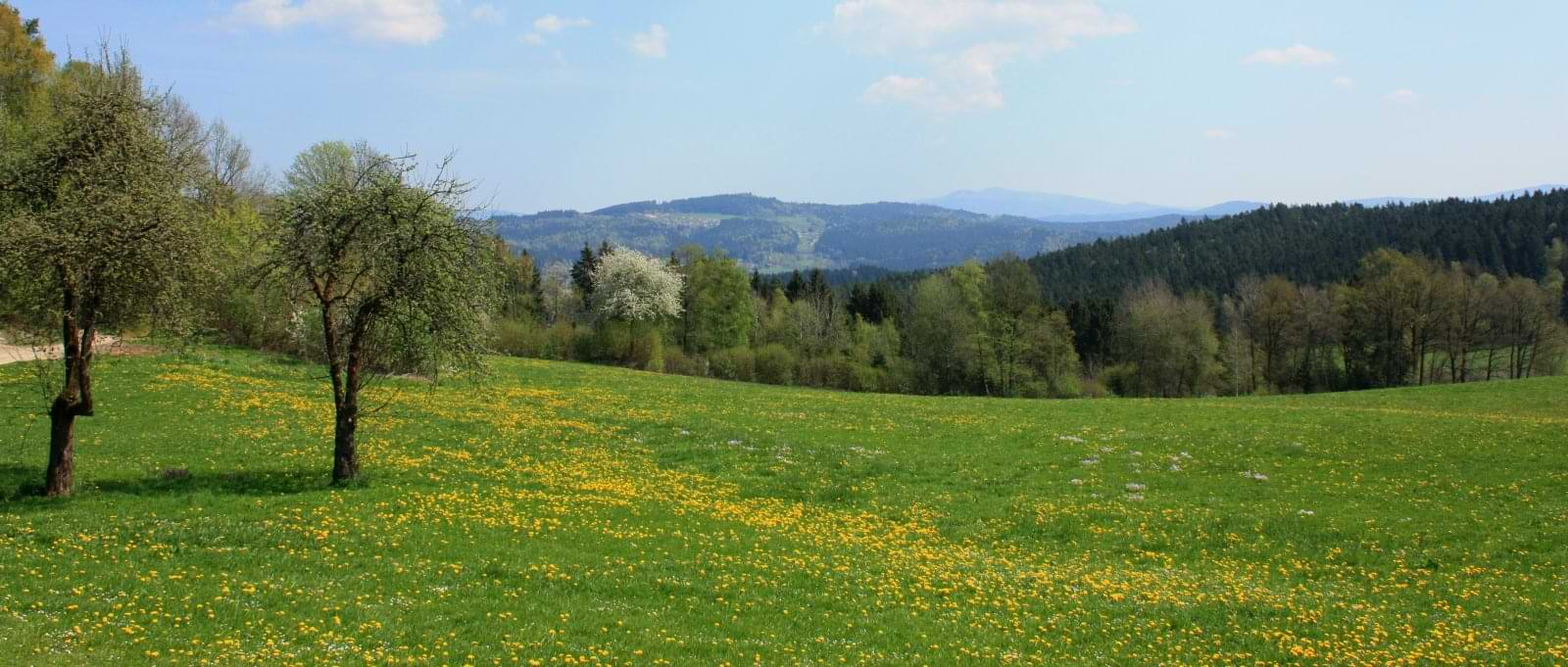 kopp-panorama-bayerischer-wald-urlaub-ferienhaus-ausblick-landschaft-1600